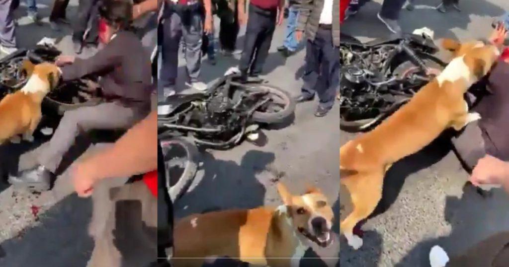 Perrito-vengador-paliza-ratero-EdoMex