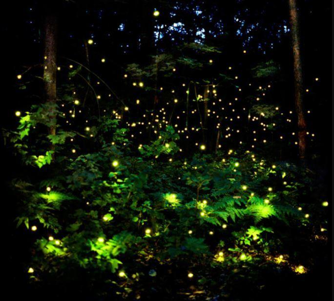 Lugares para ir a ver luciérnagas en México