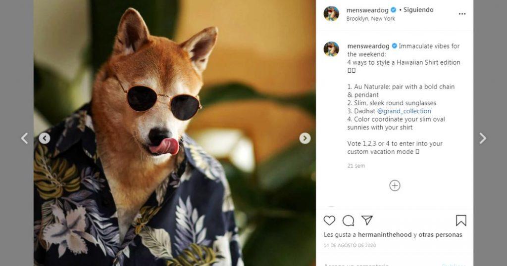Bodhi-perritos-mas-famosos-Instagram