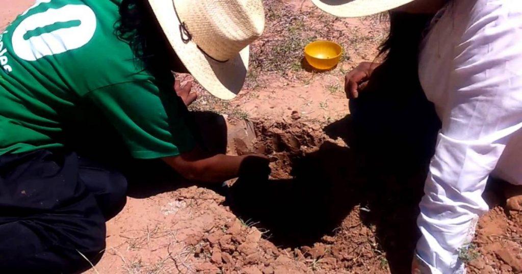 Hormigas-mexicanas-que-producen-miel-3