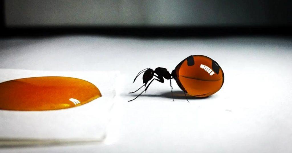 Hormigas-mexicanas-que-producen-miel-4