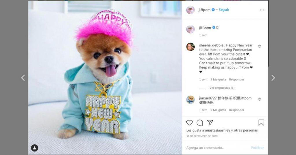Jiffpom-perritos-mas-famosos-Instagram