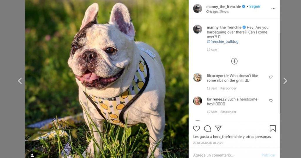 Manny-perritos-mas-famosos-Instagram
