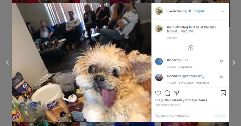 Marnie-the-dog-perritos-mas-famosos-Instagram