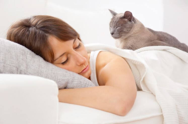 Señales que tu gato ya se apoderó de tu casa