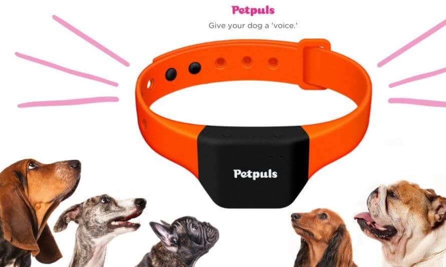 collar para monitorear las emociones de tu perrito