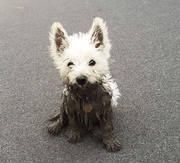 Errores comunes que acortan la vida de tus mascotas