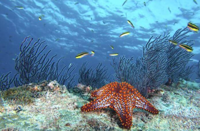 Las estrellas de mar se están extinguiendo