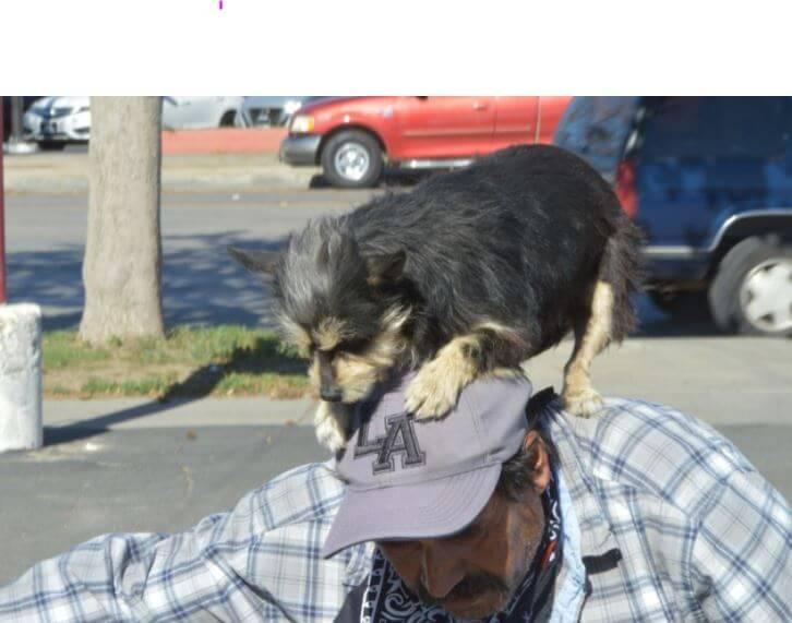 La historia detrás de la perrita que se sube a un caballito mecánico