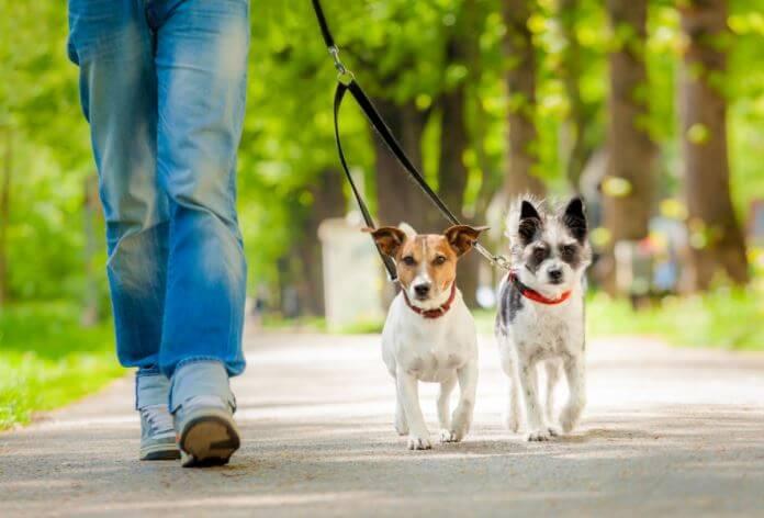 Como hacer que tu perrito se adapte a su nuevo hogar