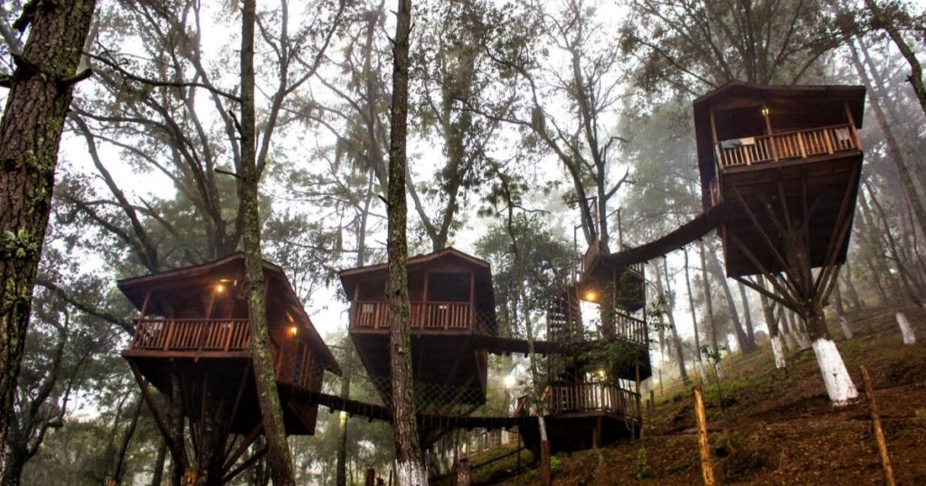 Kali-Tree-Cabanas-elevadas-bosque-3
