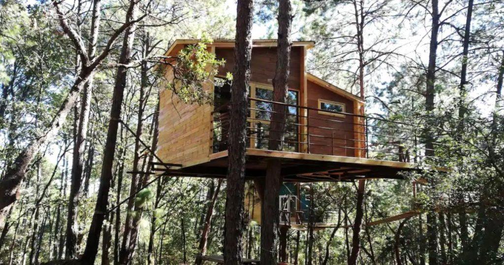 Pinochueco-cabanas-elevadas-bosque