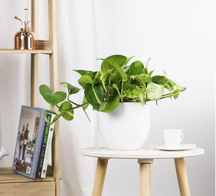 Cuáles son las plantas que ayudan a purificar el aire de tu hogar