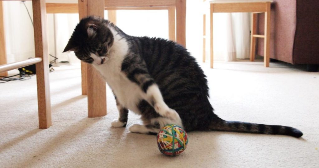 Juguetes-interactivos-caseros-para-gatos-pelota-de-goma