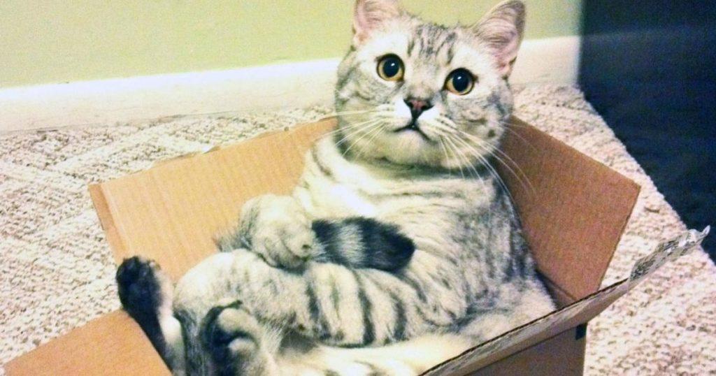 Juguetes-interactivos-caseros-y-baratos-para-gatos-hacer-comprar-Amazon-2