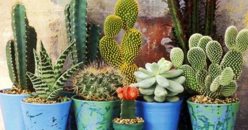 Cactus-nombres-tipos-cuidados-significado-planta-1