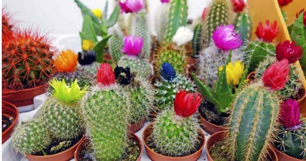 Cactus-nombres-tipos-cuidados-significado-planta-2