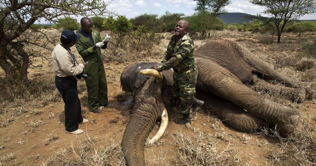 Cazador-furtivo-muere-por-estampida-de-elefantes-Sudafrica-3