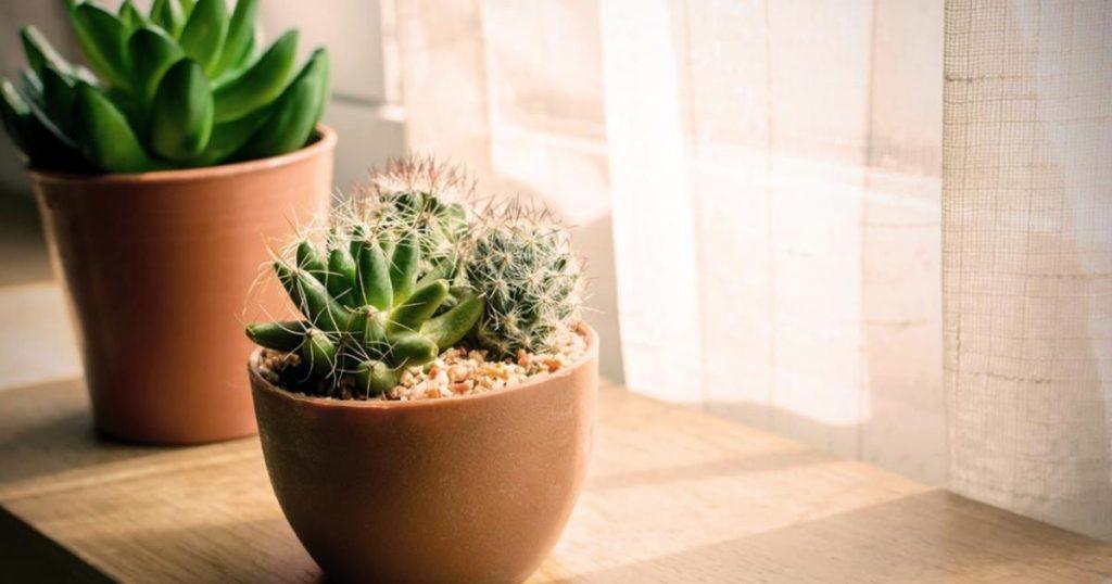 Iluminacion-plantas