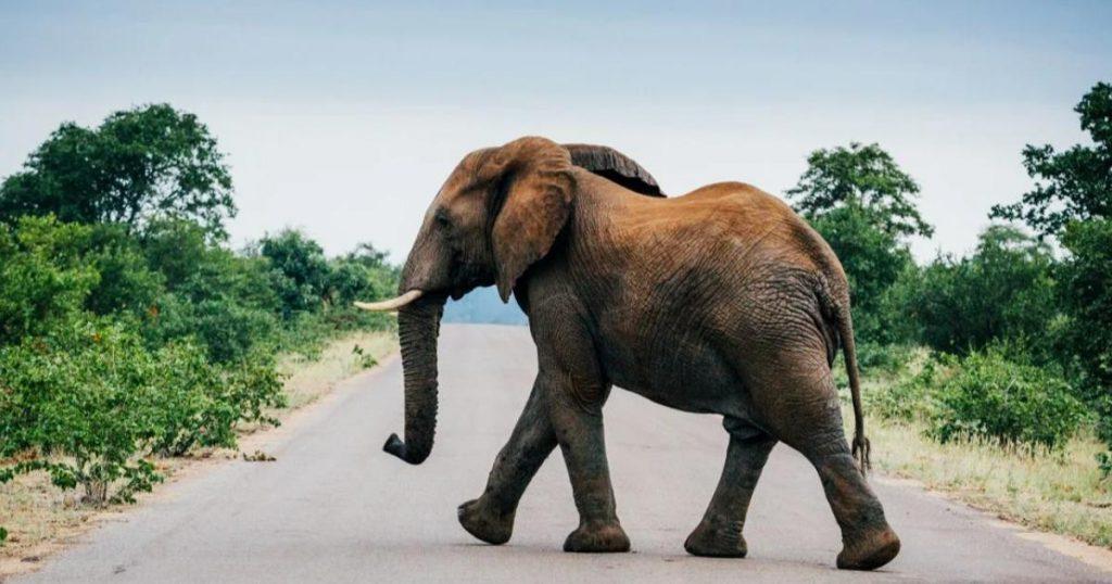 Parque-Nacional-de-Kruger-elefantes