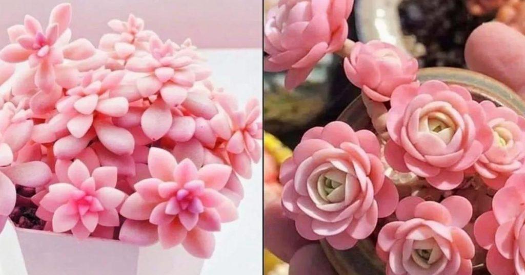 Suculentas-rosas-iluminacion
