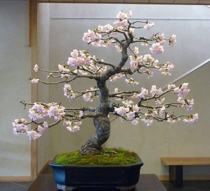 cual-es-el-significado-del-bonsai