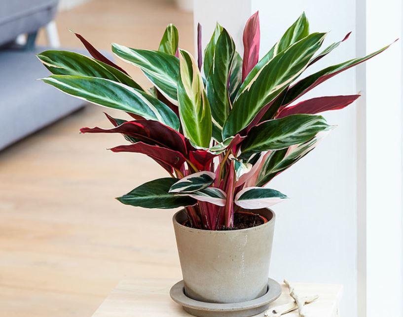 ideas-para-decorar-con-plantas
