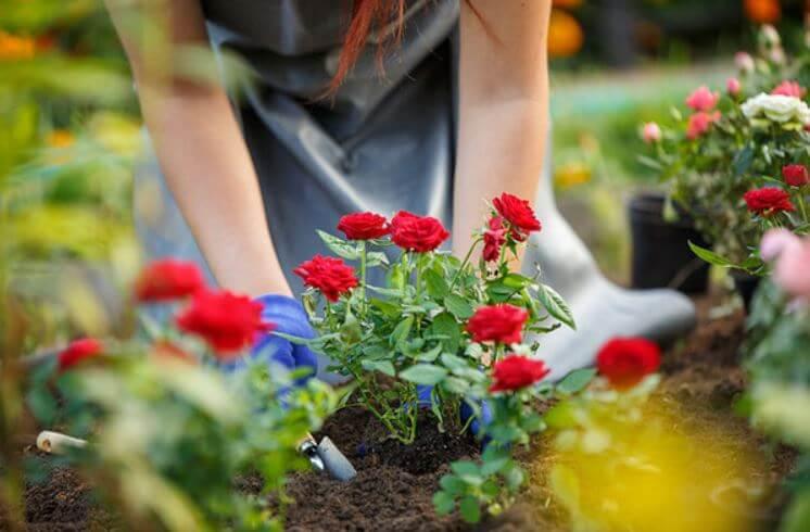 Plantas para decorar patios y jardines ¡conoce las más fáciles de cuidar!