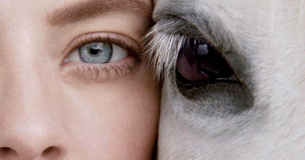 que-es-cruelty-free-marcas-libres-pruebas-en-animales-3