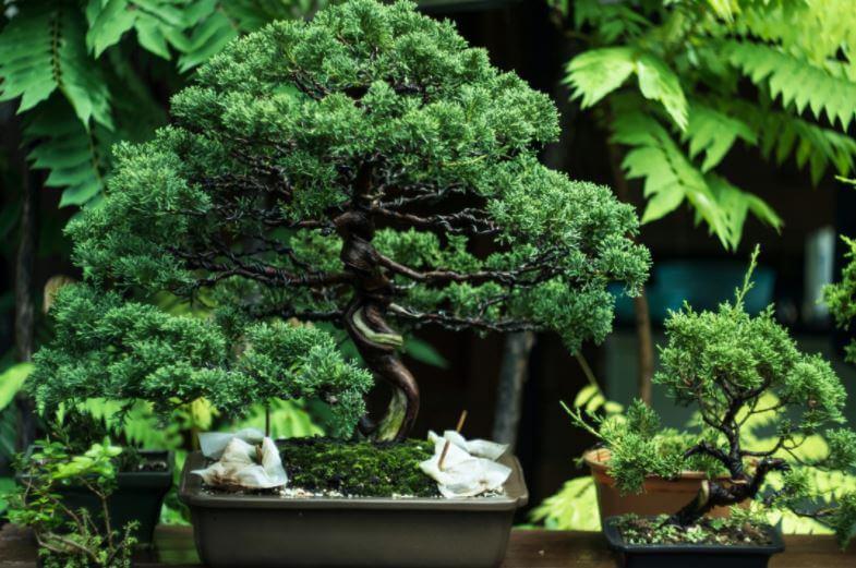 que-es-un-bonsai-Ciudad-Trendy