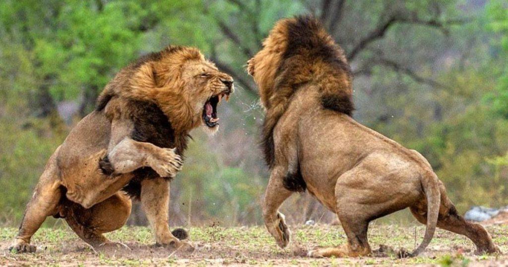 top-mejores-documentales-animales-salvajes-y-naturaleza-2