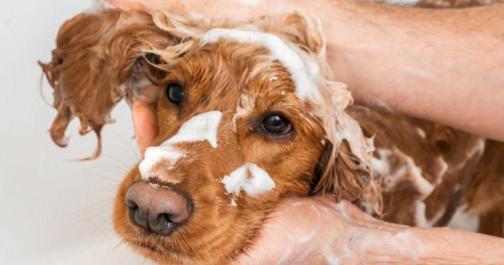 Bano-quitar-olor-perro-casa