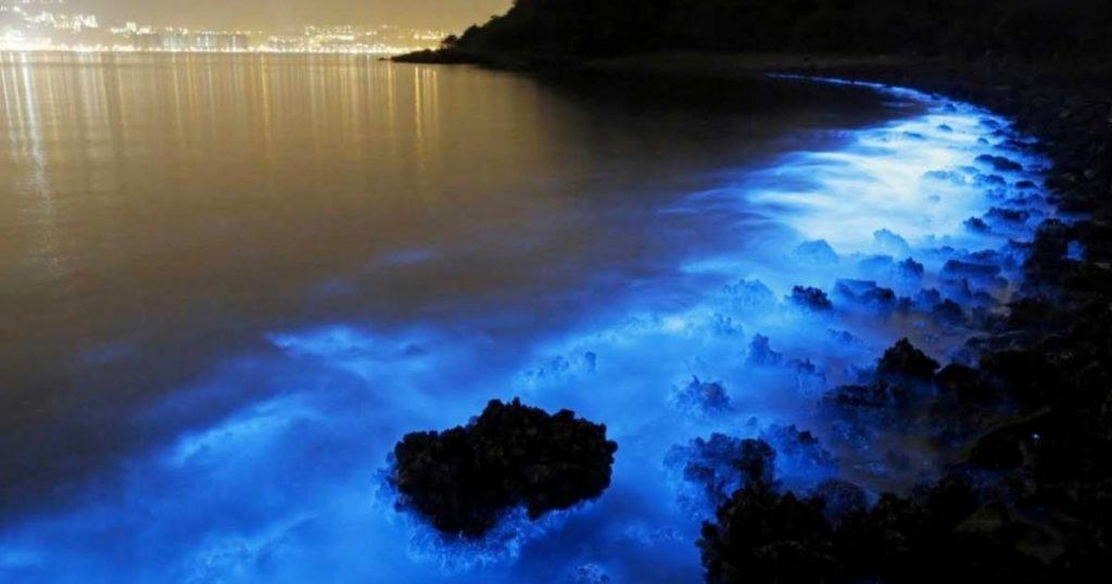 Inicio-temporada-de-bioluminiscencia-Holbox-Quintana-Roo-5
