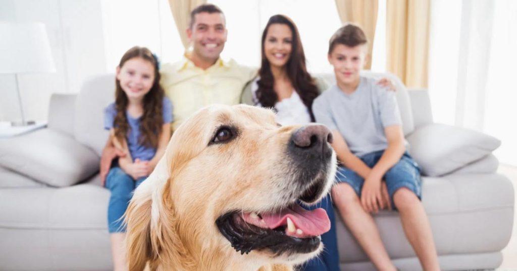 Limpieza-del-hogar-perro