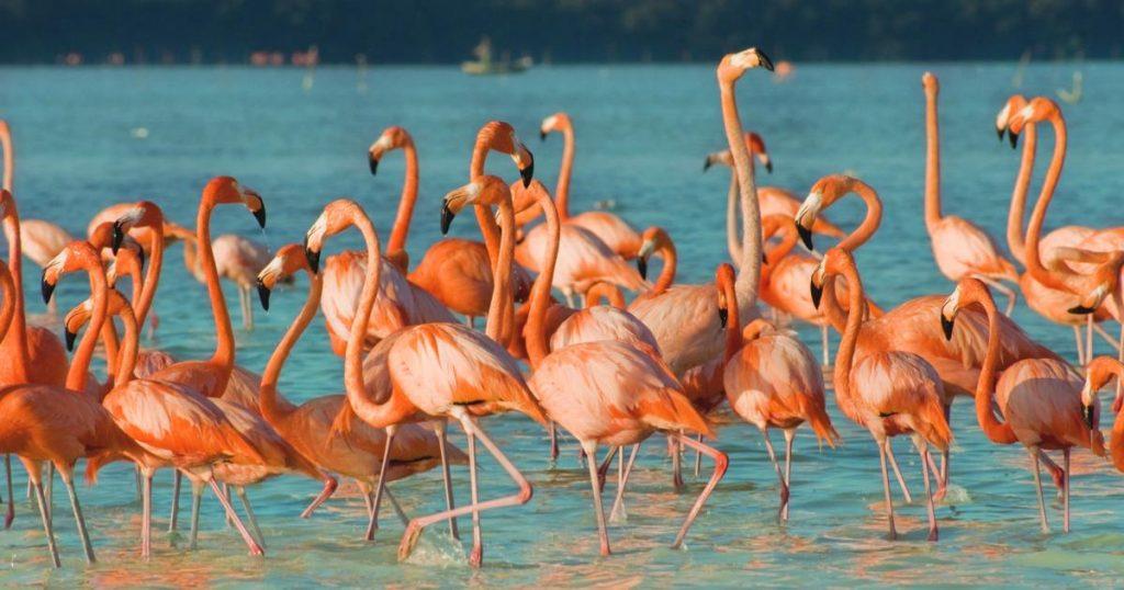 El-Cuyo-paraiso-oculto-Peninsula-Yucatan-Flamingos