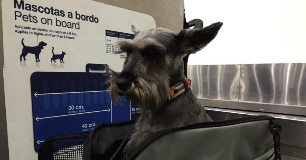 Requisitos-consejos-para-viajar-avion-con-mascota-2