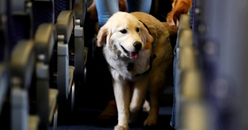 Requisitos-para-viajar-en-avion-con-mascota-2