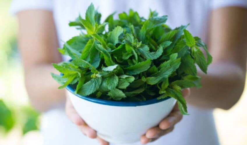 Plantas para alejar cucarachas y otros insectos de tu casa