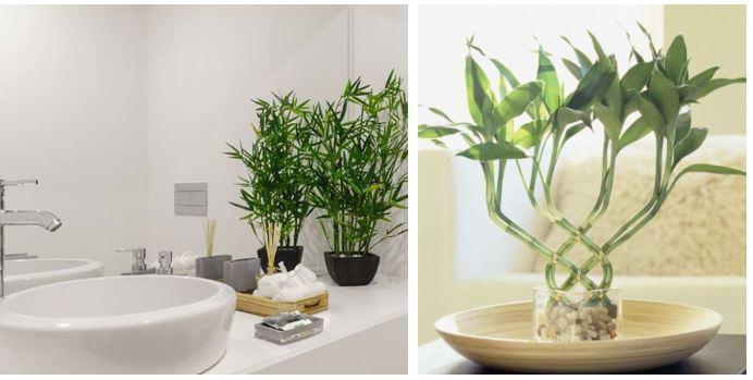 plantas-para-decorar-el-bano-bambu