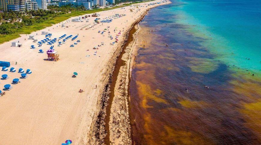sargazo-en-quintana-roo-afecta-las-playas-y-el-turismo