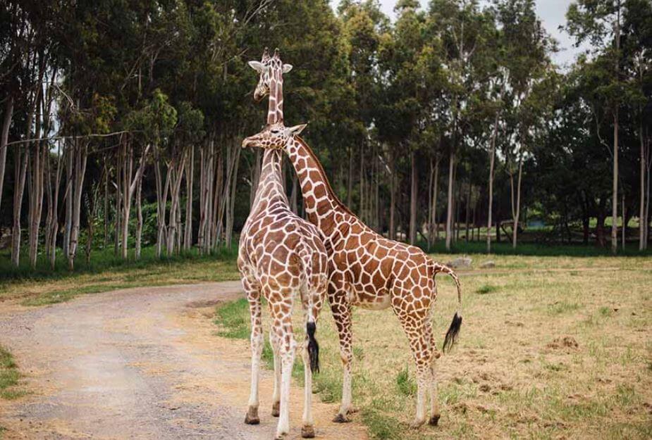que-hacer-en-guadalajara-visita-zoologico
