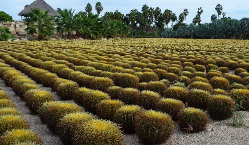 Los-jardines-mas-bellos-de-Mexico-parque-botanico-wirikuta-san-jose-los-cabos