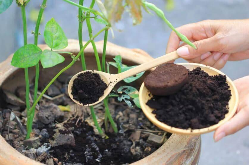 residuos-de-cafe-para-abono-fertilizante-insecticida-natural-de-plantas